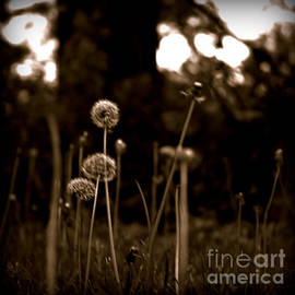 Weeds by Frank J Casella