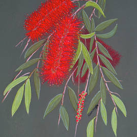 Weeping Callistemon by Alison A Murphy