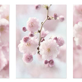 Weeping Cherry Trio by Lori Deiter