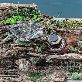 Well Weathered  by Richard Thomas