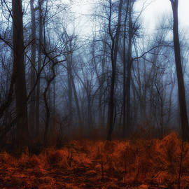 Wet Foggy Fall Day by Denise Harty