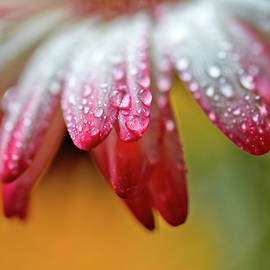 Wet Petals by Az Jackson