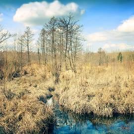 Wetland #2 by Slawek Aniol