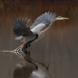 Wetland Hopping by Art Cole