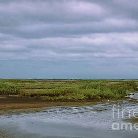 Wetland Landscape by Colleen Kammerer