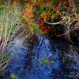 Wetland Reflections by R christopher Vest