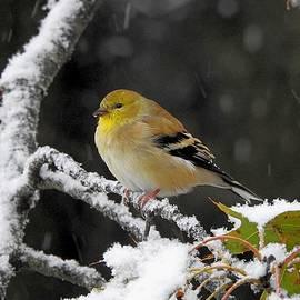 What Season is This? by Carmen Macuga