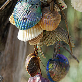 What the Shell by Amy Scheer