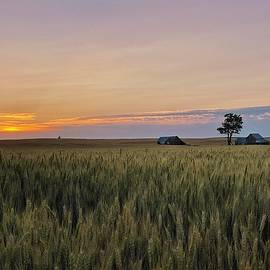 Wheat Country Sunset by Jerry Abbott