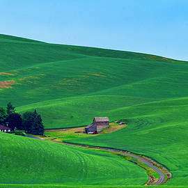 Wheat fields of the Palouse by Tim Reagan