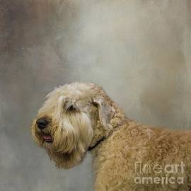 Wheaton Terrier by Eva Lechner