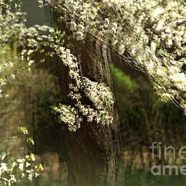 When spring is just an impression by Camelia C