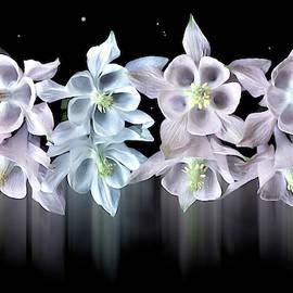 Flower ballet by larisa Fedotova
