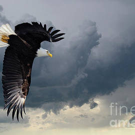 Where Eagles Dare To Fly by Bob Christopher