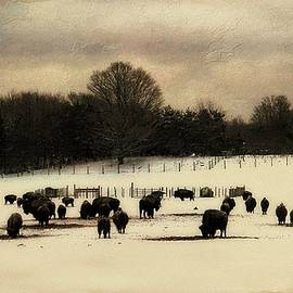 Where The Buffalo Roam In Michigan by Toni Abdnour