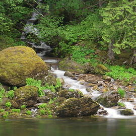 Where the stream joins the river by Jeff Swan