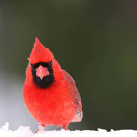 Where's The Birdseed? by Living Color Photography Lorraine Lynch