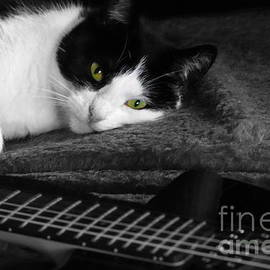 While my Guitar Gently Weeps by Linda De Klein