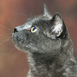 Whiskers on a Gray Cat by Richard Bryce and Family