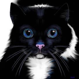 Gato by Ry M