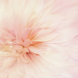 Whispering Petals by Terry Davis