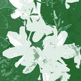 White Azalea Blooms Cutout by Marian Bell