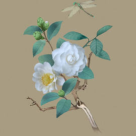 White Camellia Flowers by Spadecaller