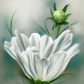 White Cosmos Flower and Bud by MM Anderson