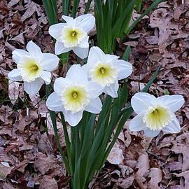 White Daffodil Flowers by Lyuba Filatova