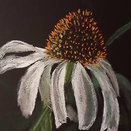 White Echinacea  by Betty-Anne McDonald