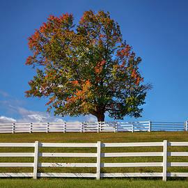 White Fence on Farm in Fall by Joann Vitali