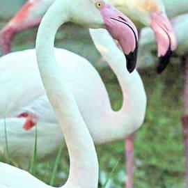 White Flamingos by Donna Kaluzniak