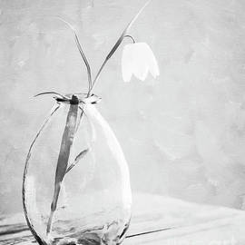 Fritillaria Flower in Black and White by Deborah Pendell
