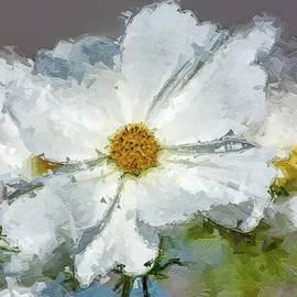 White Himalayan Poppy by Rita Di Lalla
