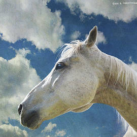 White Horse Portrait, Colorado by R christopher Vest