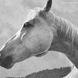 White Horse Portrait In B And W by R christopher Vest