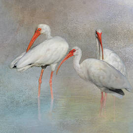 White Ibis In The Mist  by HH Photography of Florida