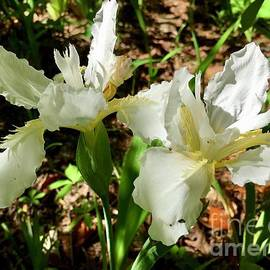 White Iris 2021 by Eunice Warfel