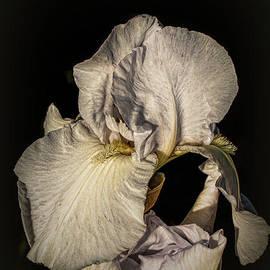 White Iris 5 by Elaine Teague
