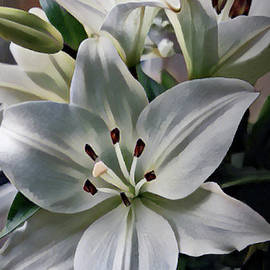 White Lilies by Yvonne Johnstone