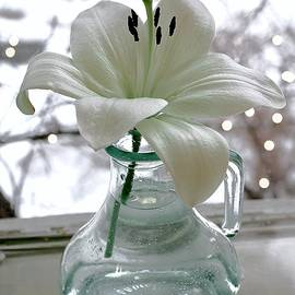 White Lily for Lil by Alida M Haslett