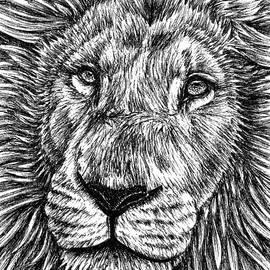 White lion by Loren Dowding