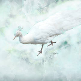 White Peacock by Pamela Williams