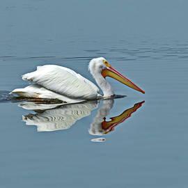 White Pelican by Lyuba Filatova