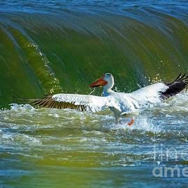 White Pelican on Yakima River #5 by William Meeuwsen