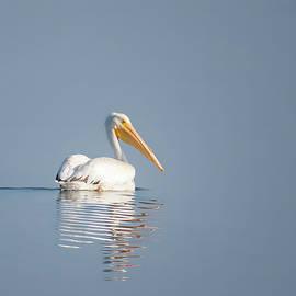White Pelican Solo by Patti Deters