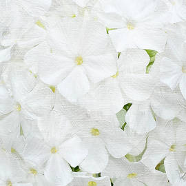 White Phlox Painterly Vertical by Patti Deters