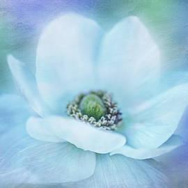 White Poppy Brightness by Terry Davis