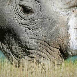 White Rhinoceros by Donna Kennedy