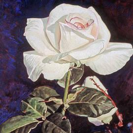 White Rose by David Lloyd Glover